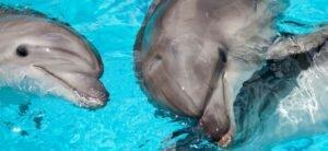 Крымский Дельфинарий в Коктебеле